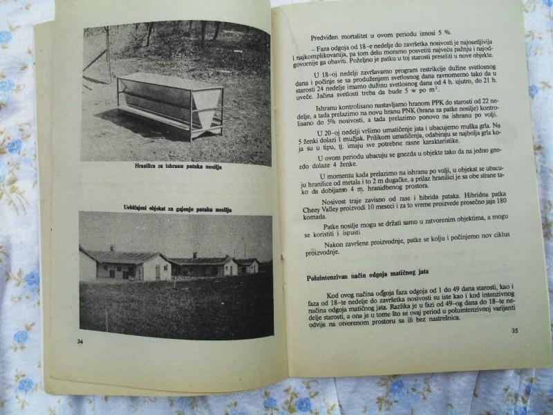 MPB broj 211 - Gajenje pataka i gusaka