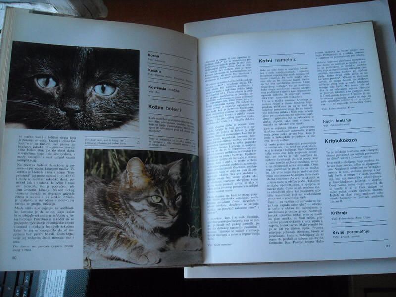 Mačke, Larousse