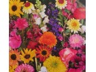 Mešavina balkonskih cveća (1300 semenki)