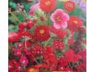 Mešavina jednogodišnjih cveća, crvena (1500 semenki)