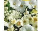 Mešavina jednogodišnjih cveća, (narandžasta)