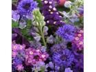 Mešavina jednogodišnjih cveća, plava (300 semenki)