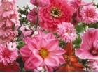Mešavina jednogodišnjih cveća, roza (150 semenki)