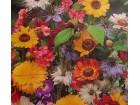Mešavina jednogodišnjih cveća, visokog rasta (500 seme)