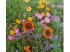 Mešavina jednogodišnjih poljskih cveća (500 semenki)
