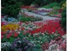 Mešavina jednoletnih cveća za kamene vrtove (700 seme)