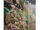 Mešavina trava (500 semenki)