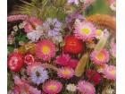 Mešavina za vezivanje buketa suvog cveća (400 semenki)