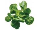 Motovilac-Valerianella locusta (700 semenki)