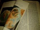 Nauka o spolnosti - enciklopedijski leksikon