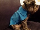 Odelo za pse -plavo somotsko