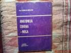 PROF . DR. DRAGAN MRVALJEVIC - ANATOMIJA COVEKA  - NOGA