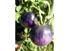 Paradajz Bosque Blue (35 semena)
