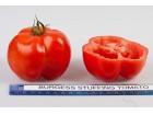 Paradajz Stuffer Crveni- paradajz paprika