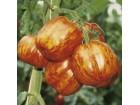Paradajz Stuffer Striped- paradajz paprika tigrasti