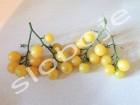 Paradajz, čeri `Belosnezhka`, 0,2g (oko 100+ semenki)