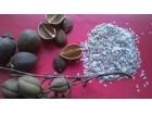 Paulovnija (Paulownia) elongata 2000 semenki