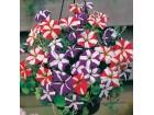 Petonija hibrida stellate mix (100 semenki)