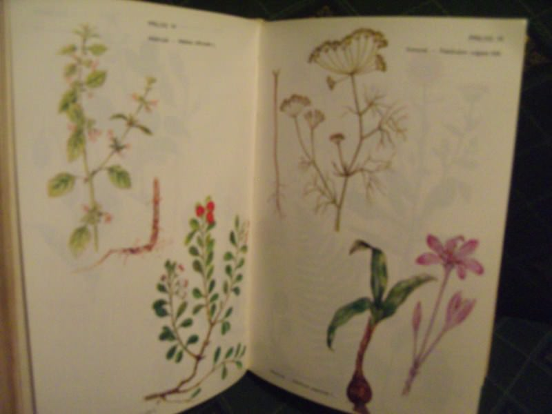 Prirodno lečenje biljem , Nikola Gelenčir