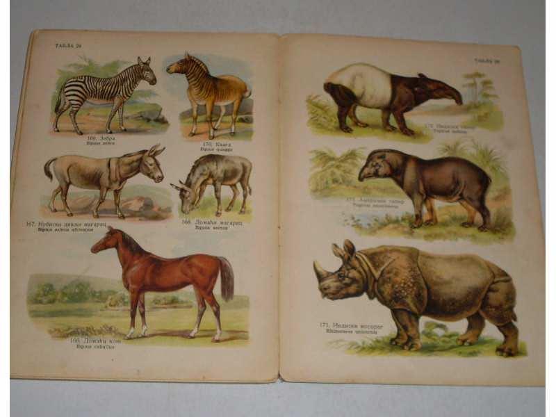 Prirodopisni atlas - Sisari