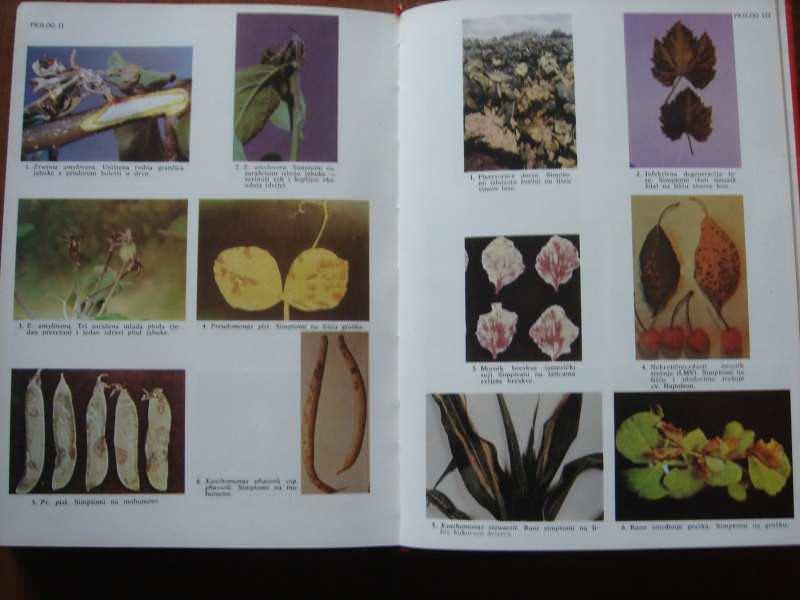 Priručnik o kantarinskim biljnim bolestima i štetočin