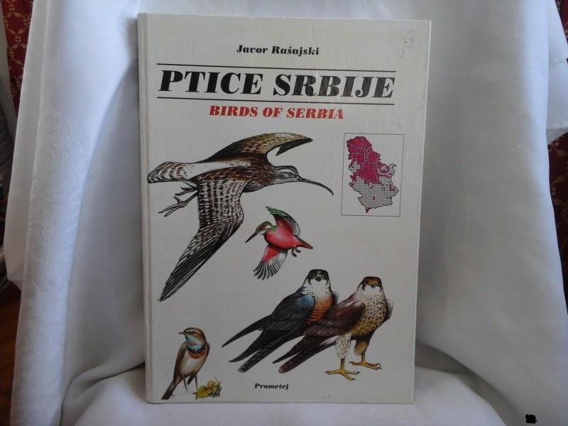 Ptice Srbije, Javor Rašajski