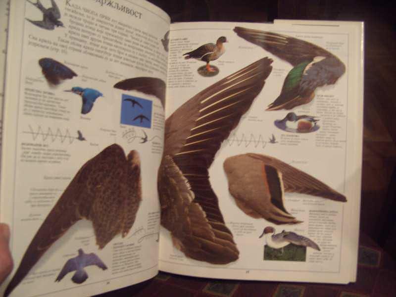 Ptice, upoznajmo svet