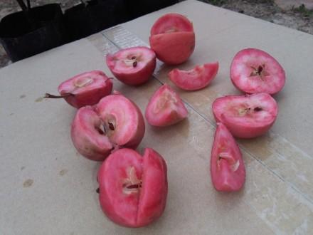 Redlove jabuka - jabuka sa crvenim mesom