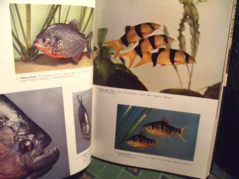 Ribe, enciklopedija