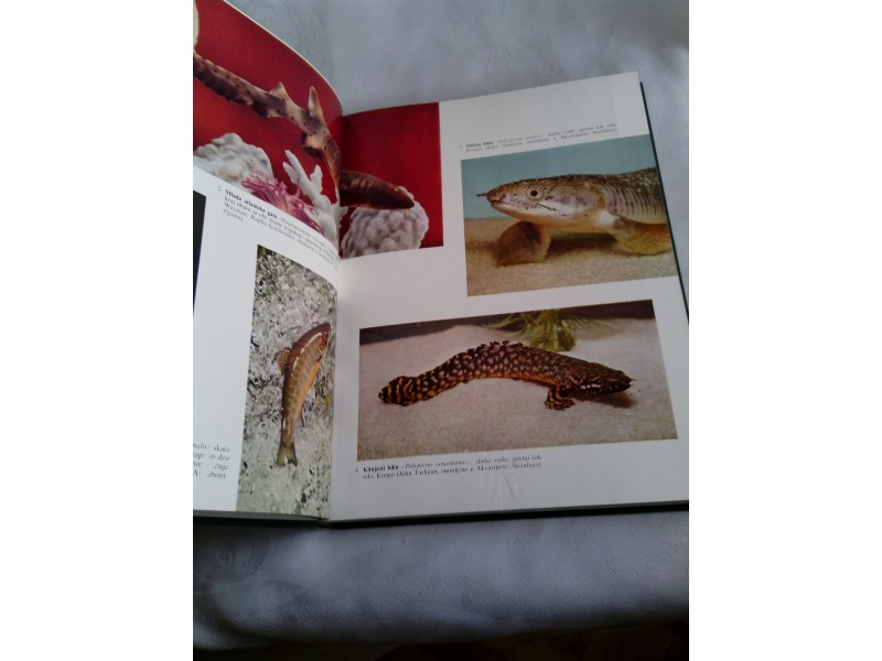 Ribe , ilustrovana enciklopedija životinjskog carstva