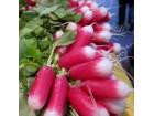 Rotkvica dugacka crvena - (30 semensa)