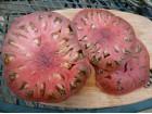 SEME paradajz CHEROKEE TOMATO