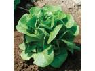 Salata `Winter Density`, 0,4g (preko 400 semenki)