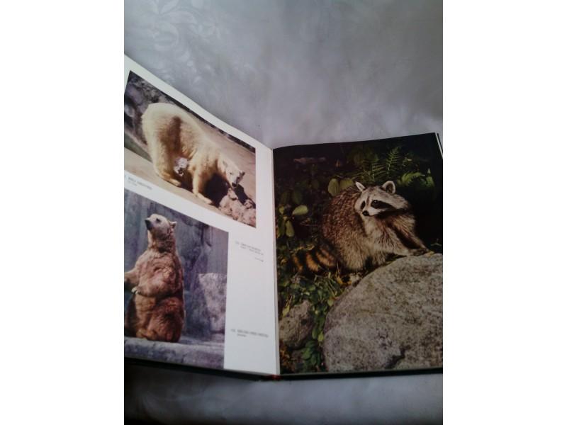 Sisari, ilustrovana enciklopedija životinjskog carstva