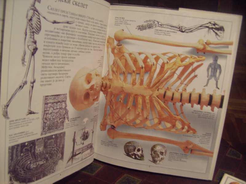 Skeleti, upoznajmo svet