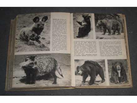 Stanjek: Svet životinja u slikama
