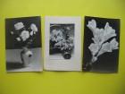 Stara razglednice Cveće (3 komada) SFRJ