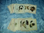 The Dog - 39 razlicitih slicica za album iz 2007 godine