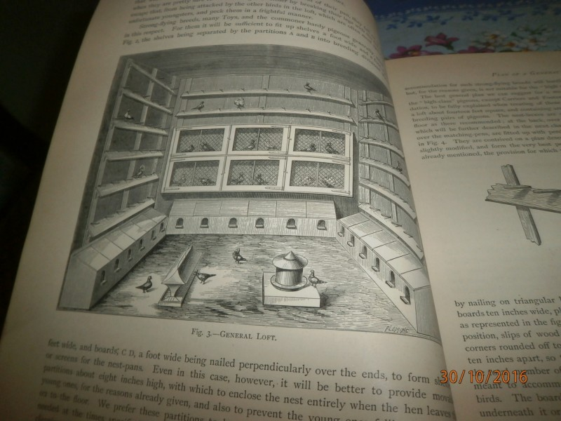 The Illustrated Book of Pigeons.