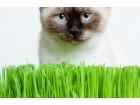 Trava za mačke (bio) 600 semenki