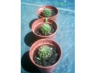 Tri mala kaktusa