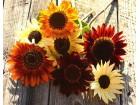 Ukrasni suncokret visoki, miks, 3g (oko 75 semenki)