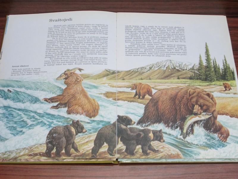 Upoznajte medvede i pande