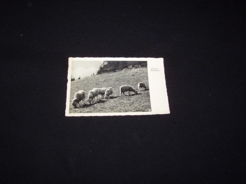 Vaskrsnja cestitka,oko 1930,cista.