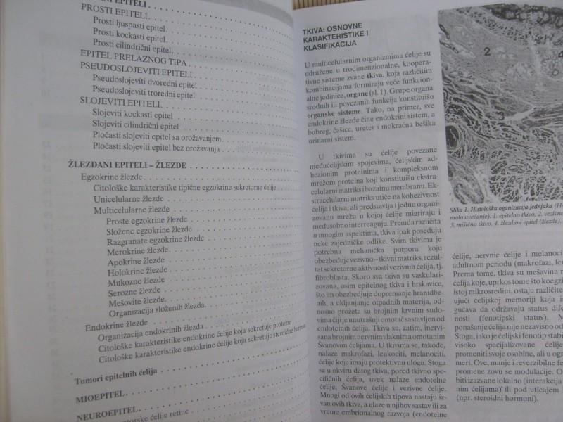 Vesna Lačković, HISTOLOGIJA, EPITELNA TKIVA
