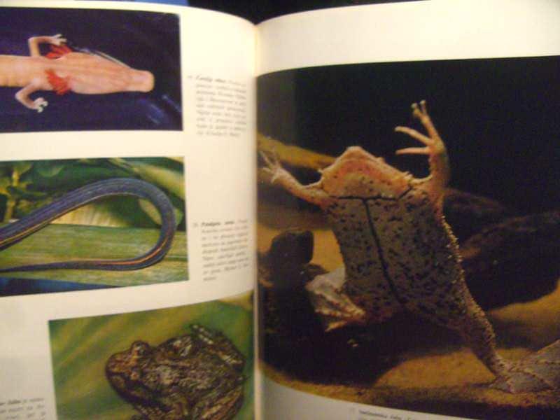 Vodozemci, ilistrovana  enciklopedija životinjskog