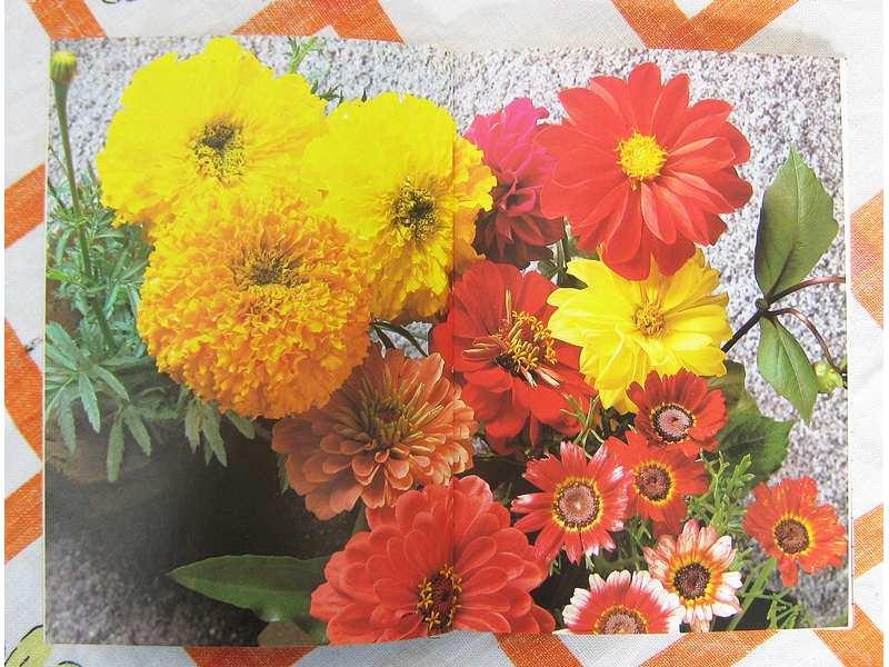 Vrtno cvijeće
