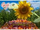 ZUTE I BORDO godzi bobice - 100 g (goji berry) sveze