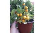 Žuti cherry paradajz - 30 semenki