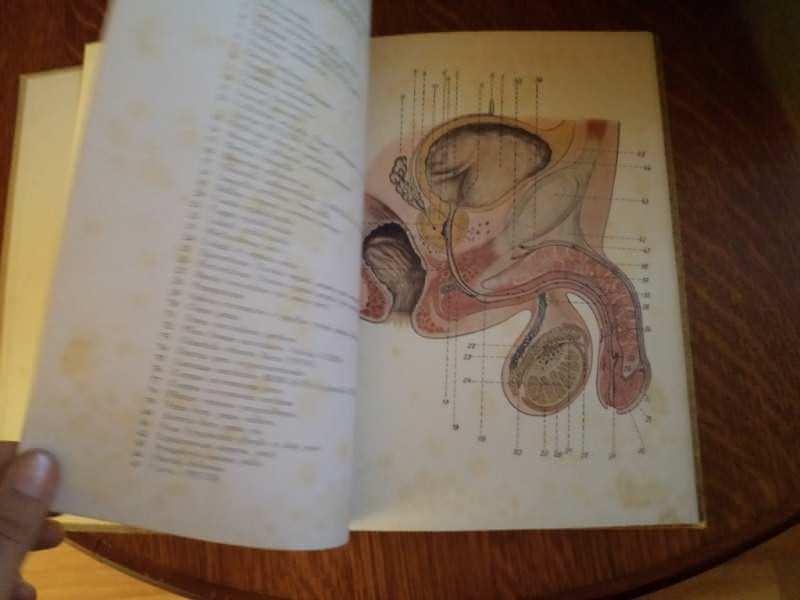 tabulae venereologicae